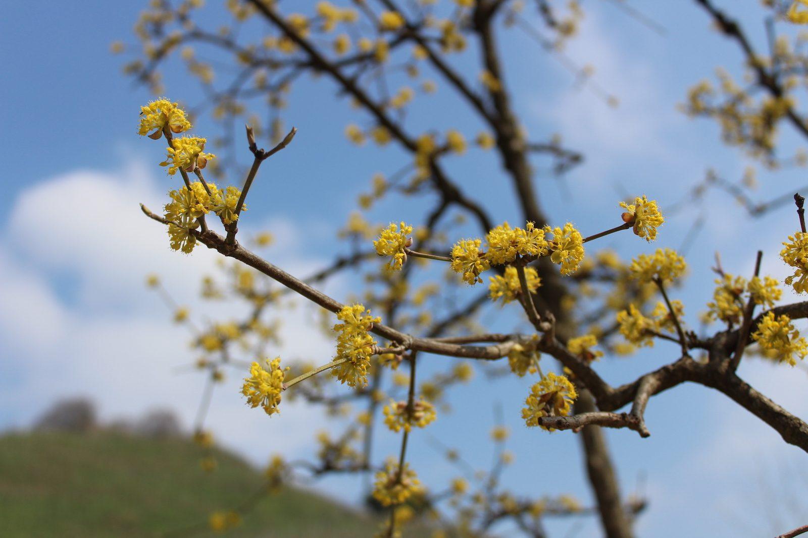 Primavera del Prosecco